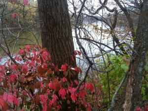 The Wabash River plants in bloom